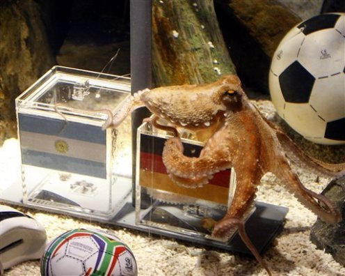 Paul the Octopus predicts Germany to win over Argentina