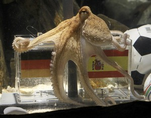 Paul The Octopus Prediction Spain vs Germany