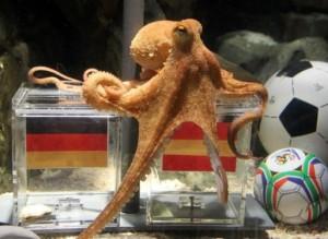 Paul the Octopus Picks Spain