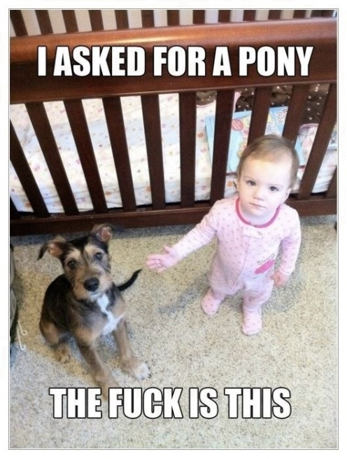 I-asked-for-a-pony-the-fuck-is-this